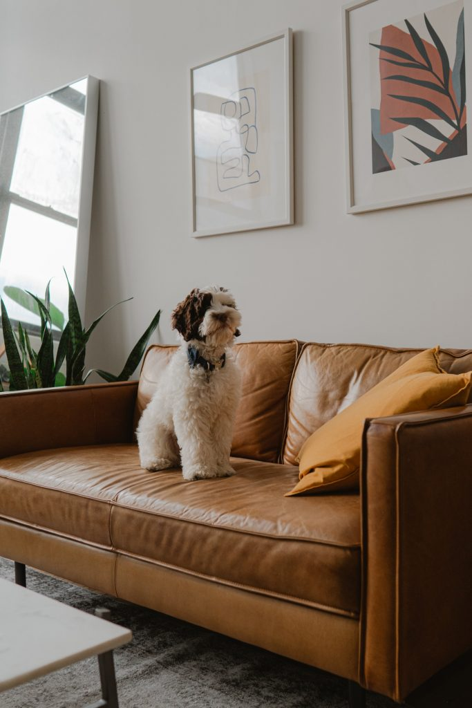 pets on leather lounges